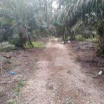 pontian 10 agricultural  agricultural landss 10 acres land area selling from rm 2,300,000 at pontian, johor, malaysia #4169