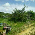 ban foo 2 guava agricultural  agricultural landss 2 acres floor space selling at rm 660,000 #4216