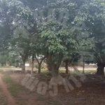 pontian 2.4 palm oil tree  agricultural lands 2.4 acres floor space selling price rm 1,672,704 #4194
