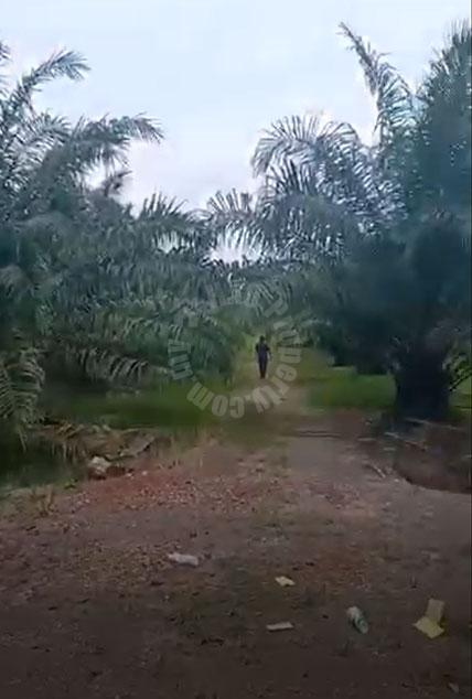 pontian 2.4 palm oil tree  agricultural landss 2.4 acres land-area sale at rm 1,672,704 #4193