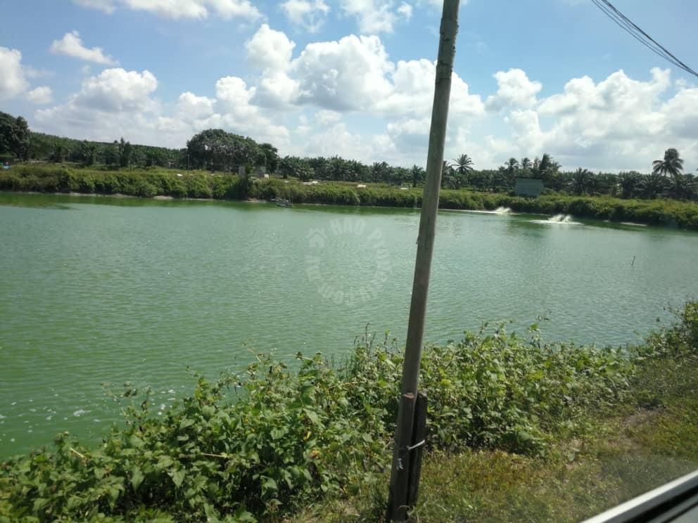 93 kota tinggi fish or prawn farming agricultural landss 93 acres floor area sale price rm 15,810,000 on senai-desaru 81800 ulu tiram, johor, malaysia #4722