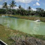 93 kota tinggi fish or prawn farming agricultural landss 93 acres area of ground selling at rm 15,810,000 at senai-desaru 81800 ulu tiram, johor, malaysia #4724