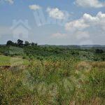 sedili kota tinggi agricultural  agricultural lands lease at rm 35 at sedili besar, kota tinggi, johor, malaysia #5190