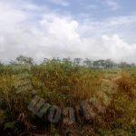 sedili kota tinggi agricultural  agricultural lands lease at rm 35 at sedili besar, kota tinggi, johor, malaysia #5188