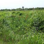 sedili kota tinggi agricultural  agricultural landss rental price rm 4,545 in sedili besar, kota tinggi, johor, malaysia #5189