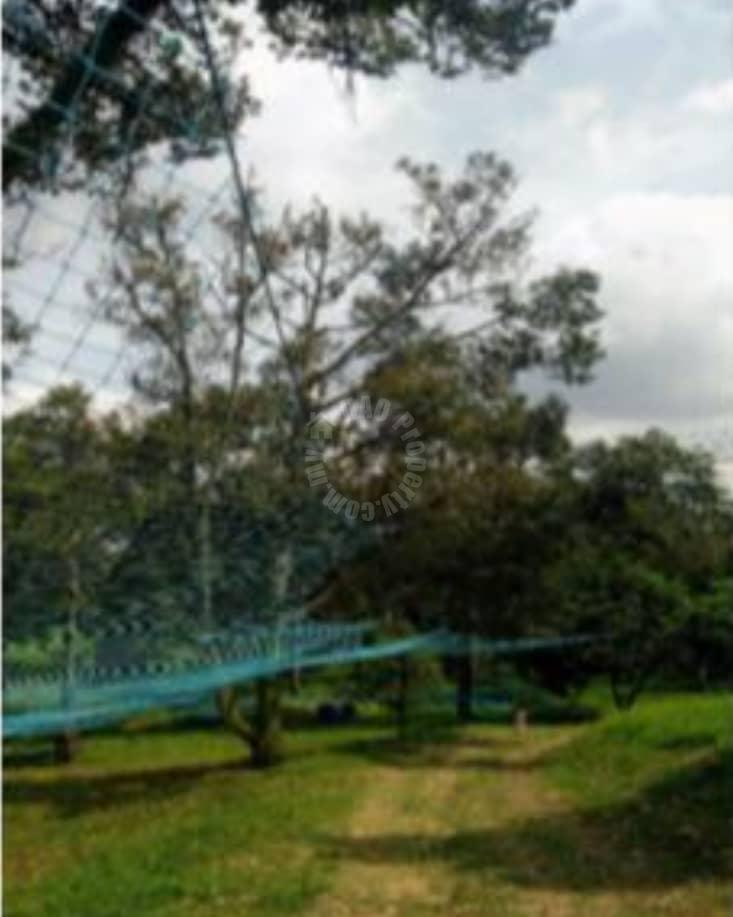 bukit batu 3.7 durian farm agricultural lands 3.7 acres land-area selling from rm 1,600,000 in bukit batu, kulai #7328