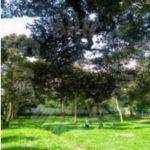 bukit batu 3.7 durian farm agricultural lands 3.7 acres land area sale price rm 1,600,000 on bukit batu, kulai #7329