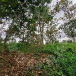 kangkar pulai 2 agricultural  lands 1.9 acres land area selling from rm 900,000 on kangkar pulai, johor, malaysia #7380