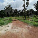 segamat 50 durian farm lands 50 acres area of ground selling from rm 15,500,000 in segamat, jementah #7386