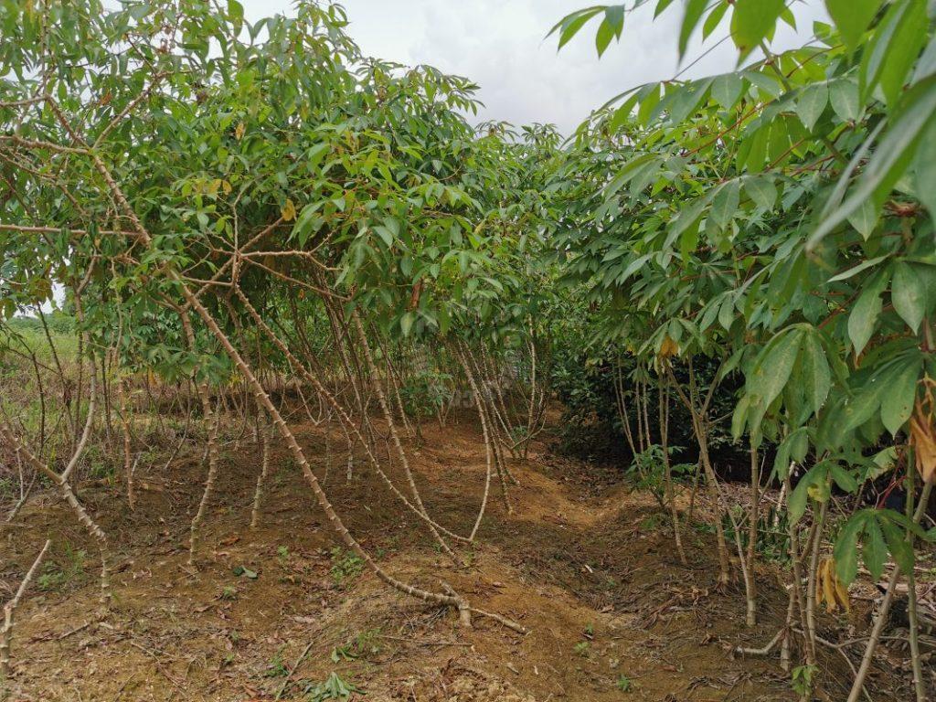 kangkar pulai 2 agricultural  landss 1.9 acres floor space sale at rm 900,000 at kangkar pulai, johor, malaysia #7376