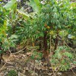 kangkar pulai 2 agricultural  lands 1.9 acres floor area sale from rm 900,000 at kangkar pulai, johor, malaysia #7378