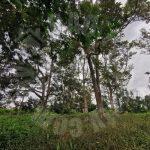 kangkar pulai 2 agricultural  landss 1.9 acres land-area sale from rm 900,000 in kangkar pulai, johor, malaysia #7379