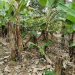 kangkar pulai 2 agricultural  landss 1.9 acres land area selling at rm 900,000 at kangkar pulai, johor, malaysia #7377