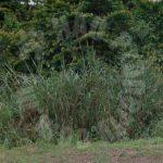 kulai agricultural beside road agricultural landss 20 acres area of ground lease price rm 85 at jalan kulai - kota tinggi, 81000 kulai, johor, malaysia #7603
