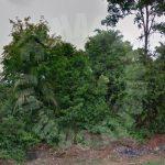 kulai agricultural beside road agricultural landss 20 acres land area rental from rm 85 at jalan kulai - kota tinggi, 81000 kulai, johor, malaysia #7605